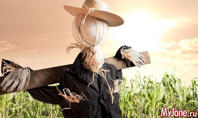 Пугало, ультразвук и другие способы сберечь урожай