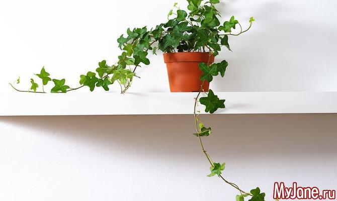 Какие растения не стоит держать дома