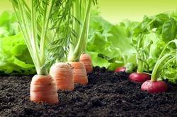 Вегетарианство снижает давление