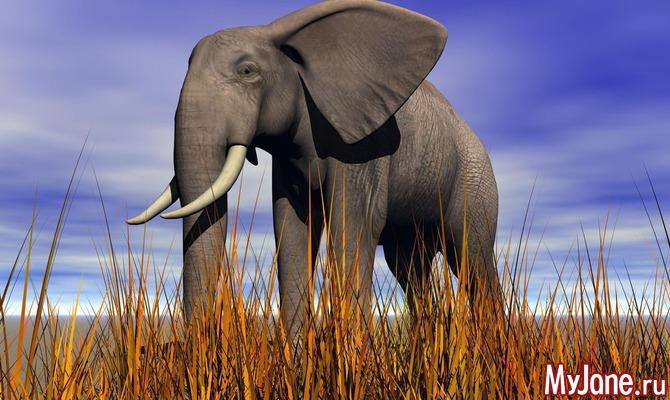 22 сентября - День защиты слонов