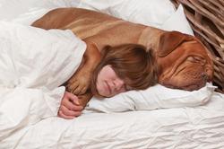 Спать в одной кровати с собакой вредно для здоровья