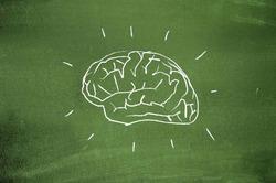 Человек использует весь мозг, а не 10%