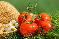 Употребление помидоров меняет запах пота
