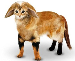 Составлено изображение идеального домашнего животного