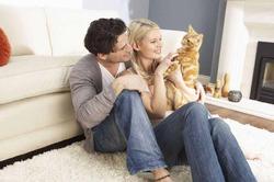 Кошки помогают предотвратить инфаркты и инсульты