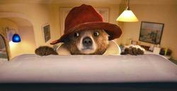Скоро в кино: мультфильм о приключениях медвежонка Паддингтона