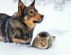 Владельцы кошек и собак имеют разные черты характера