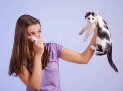 В Британии кошки заражают людей туберкулезом