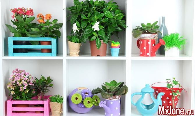 Когда в доме вместе растения и дети