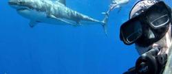 Селфи с акулой-людоедом