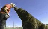 Сахалинский поцелуй