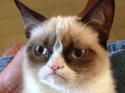 Фильм о «сердитой кошке» станет блокбастером