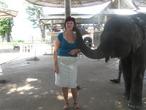 Нежный поцелуй слонёнка