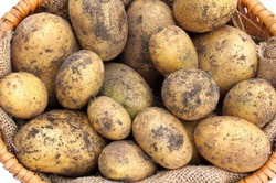 В России хотят запретить продукты с ГМО