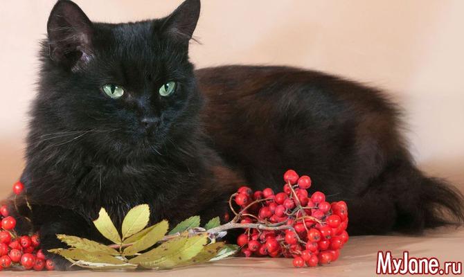 День, когда черному коту везет