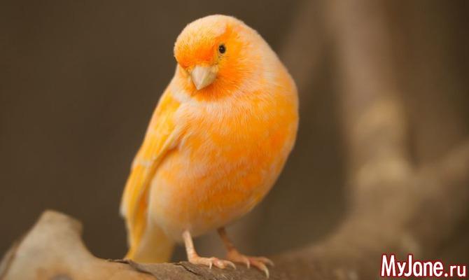 Птичка певчая…