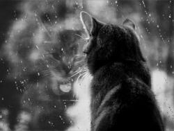 ... и за окном так серо и уныло...