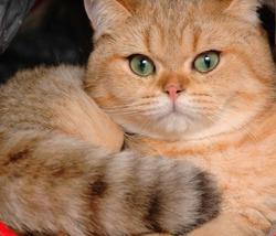 Дневник кота! Ответ дневнику домового!