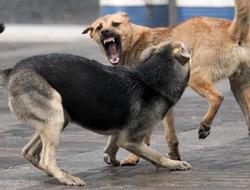 В Твери стая одичавших собак насмерть загрызла женщину
