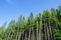 Россия оказалась мировым лидером по уничтожению лесов