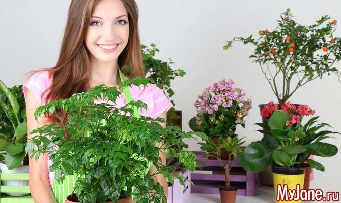 Размещаем комнатные цветы в интерьере