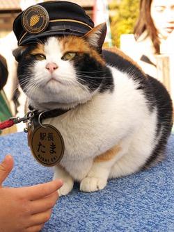 Японская ж/д компания выбрала нового смотрителя-кота