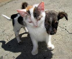 В столице установят «бэби-боксы» для кошек и собак