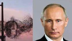 Стая птиц в небе Америке собралась в лицо Путина