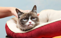 В Музее мадам Тюссо появится Сердитый кот