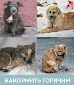 Пять простых способов помочь бездомным животным пережить зиму.