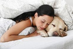 Домашние животные в постели хозяина