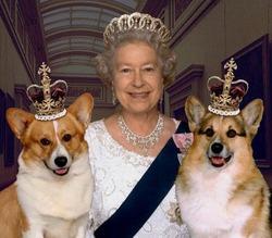 Елизавета II отказывается держать во дворце собак