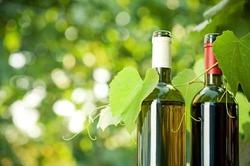 Социальные сети могут развивать алкоголизм
