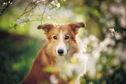 Собаки различают настроение людей по выражению лица