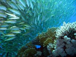 В ОАЭ туристам будут предлагать подводное сафари