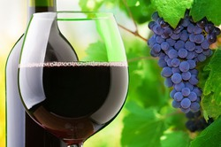 Глобальное потепление изменит вкус вина