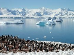 Вместо снегов – леса. В Антарктиде найдены остатки леса