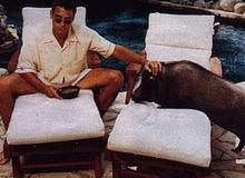 Боров Макс прожил у Клуни 18 лет, сопровождая на съемках и вечеринках фото