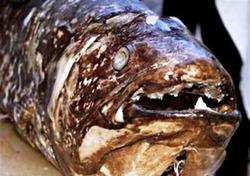 Предком человека может быть древняя рыба
