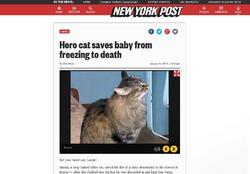 Кошка спасла брошенного в подъезде новорожденного