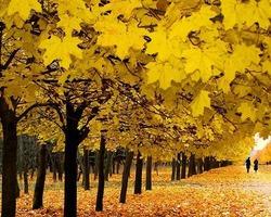 Листья с позолотой