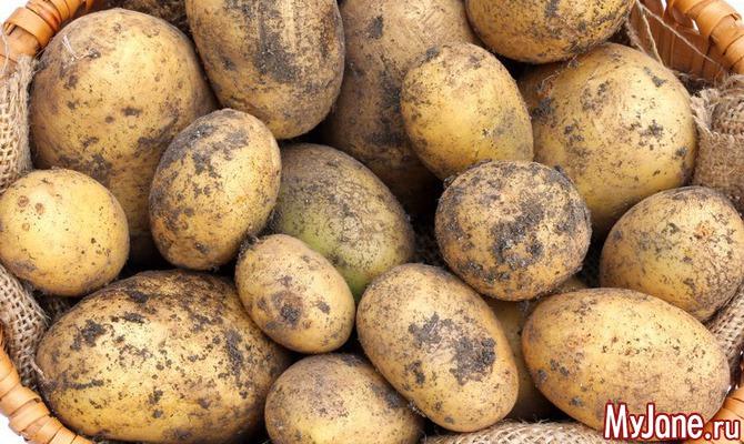 Пошли копать картошку