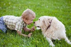 В Финляндии завершился чемпионат мира по сюсюканью с собаками