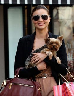 Собака Миранды Керр снялась в рекламе