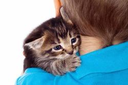 Кошки снижают успеваемость детей