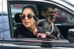 Леди Гага стала дизайнером одежды для собак