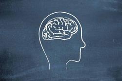К вечеру мозг человека уменьшается
