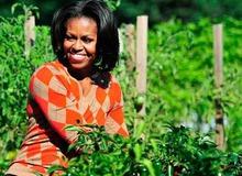 Около Белого Дома Мишель Обама выращивает овощи фото