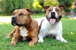Шведских собак подкармливают витаминами на улице