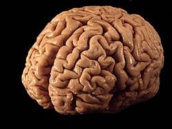 Учёные нашли мозг, возраст которого 2600 лет